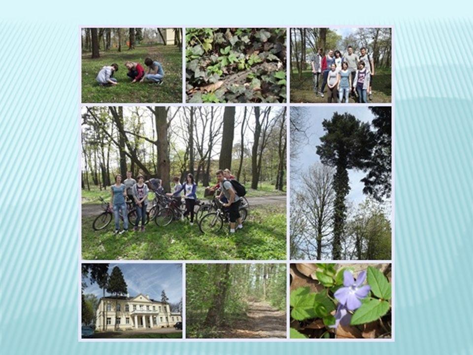powierzchnia parku: 5,71 ha, na terenie parku znajduje się mała wysepka w parku znajduje się pałac eklektyczny z XIX w.