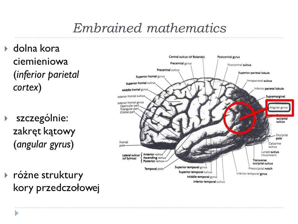 Embrained mathematics dolna kora ciemieniowa (inferior parietal cortex) szczególnie: zakręt kątowy (angular gyrus) różne struktury kory przedczołowej