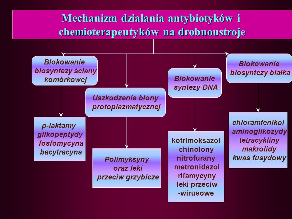 Blokowanie biosyntezy ściany komórkowej Uszkodzenie błony protoplazmatycznej Blokowanie biosyntezy białka Blokowanie syntezy DNA p-laktamy glikopeptydy fosfomycyna bacytracyna Polimyksyny oraz leki przeciw grzybicze chloramfenikol aminoglikozydy tetracykliny makrolidy kwas fusydowy kotrimoksazol chinolony nitrofurany metronidazol rifamycyny leki przeciw -wirusowe Mechanizm działania antybiotyków i chemioterapeutyków na drobnoustroje
