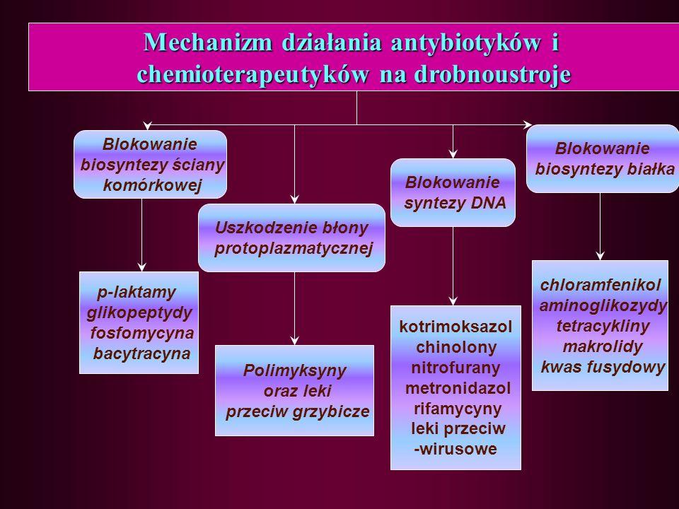 Penicyliny Benzylopenicyliny (penicylina G) Fenoksypenicyliny (penicylina V, fenetycylina) Izoksazolilopenicyliny (oksacylina, kloksacylina) Aminopenicyliny (ampicylina, amoksycylina) Karbamoiloacyloaminopenicyliny (azlocylina, piperacylina) Amidynopenicyliny (mecylinam) Karboksypenicyliny (karbrnicylina, tikarcylina) Różne (metycylina)