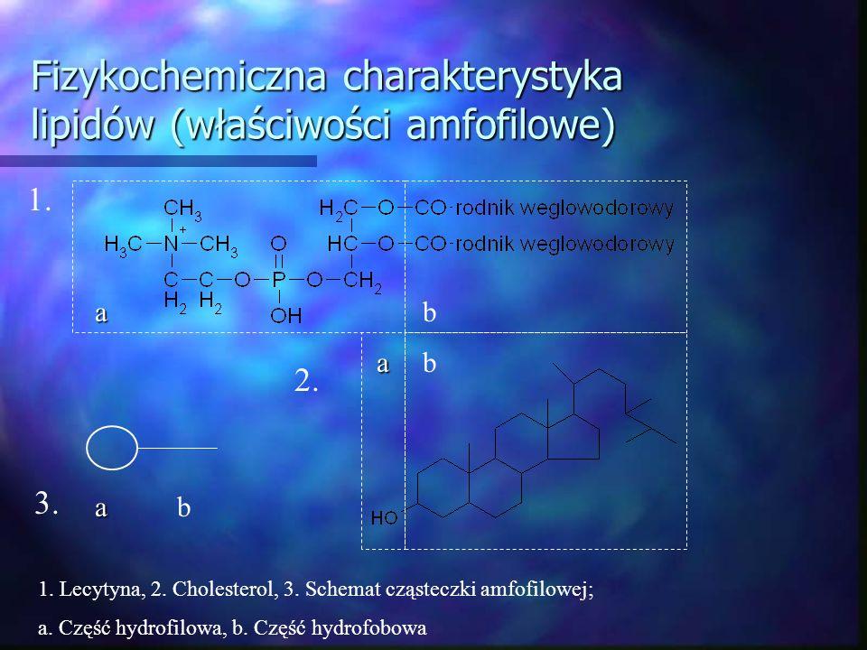 Fizykochemiczna charakterystyka lipidów (właściwości amfofilowe) ab 1. ab ab 2. 3. 1. Lecytyna, 2. Cholesterol, 3. Schemat cząsteczki amfofilowej; a.
