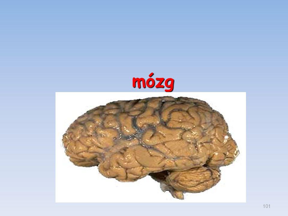mózg 101
