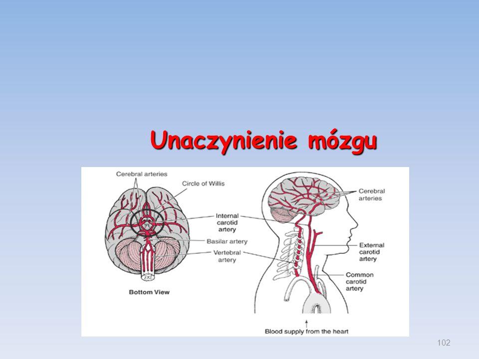 Unaczynienie mózgu 102