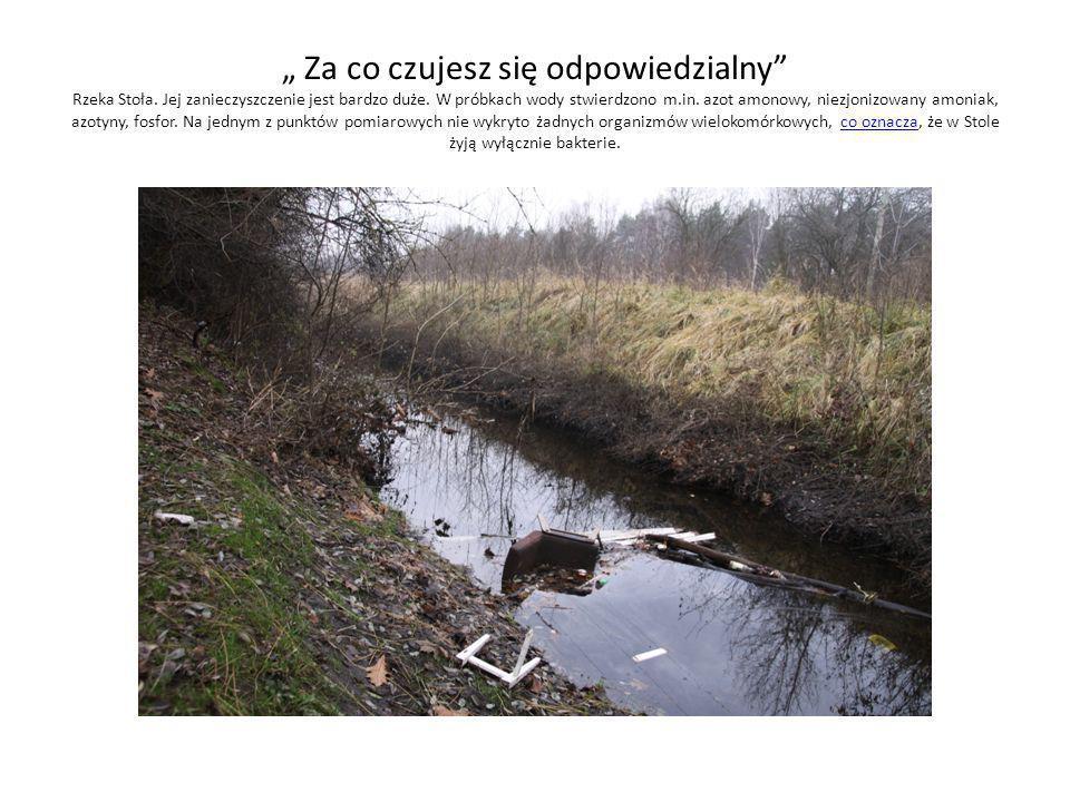 Za co czujesz się odpowiedzialny Rzeka Stoła. Jej zanieczyszczenie jest bardzo duże. W próbkach wody stwierdzono m.in. azot amonowy, niezjonizowany am