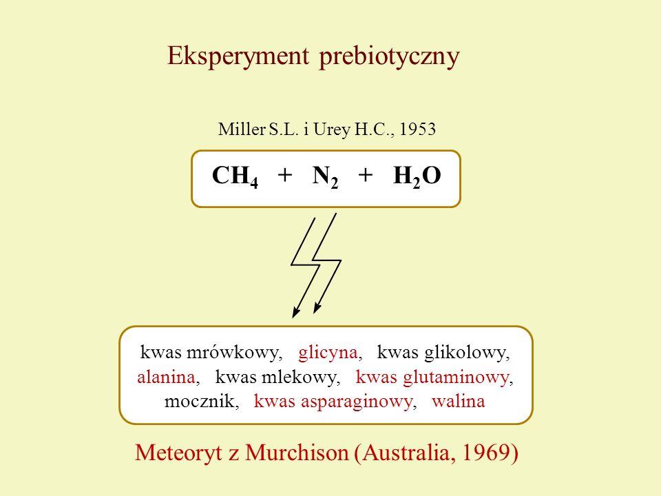 Eksperyment prebiotyczny CH 4 + N 2 + H 2 O kwas mrówkowy, glicyna, kwas glikolowy, alanina, kwas mlekowy, kwas glutaminowy, mocznik, kwas asparaginow