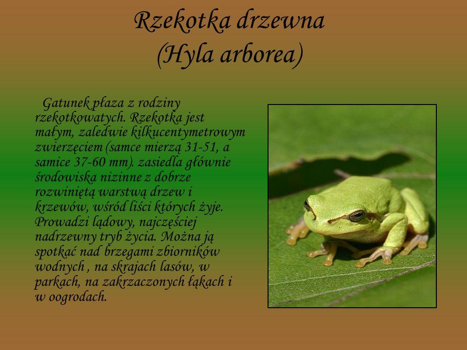 Nadobnica alpejska (Rosalia alpina) Owad z rzędu chrząszczy. W Polsce jest to gatunek objęty ścisłą ochroną gatunkową, znajduje się na czerwonej liści