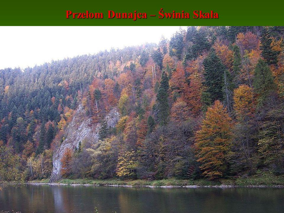 Przełom Dunajca – Świnia Skała