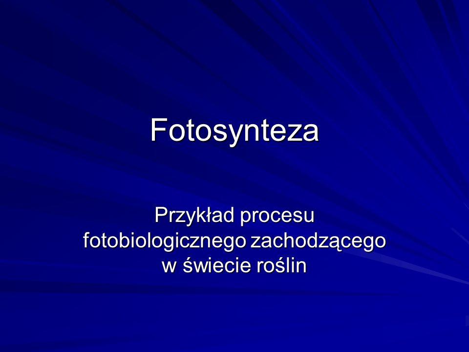Fotosynteza Przykład procesu fotobiologicznego zachodzącego w świecie roślin