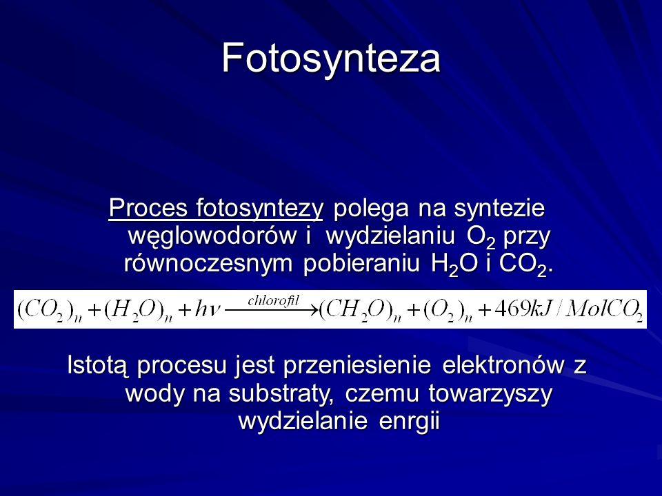 Fotosynteza Proces fotosyntezy polega na syntezie węglowodorów i wydzielaniu O 2 przy równoczesnym pobieraniu H 2 O i CO 2. Istotą procesu jest przeni