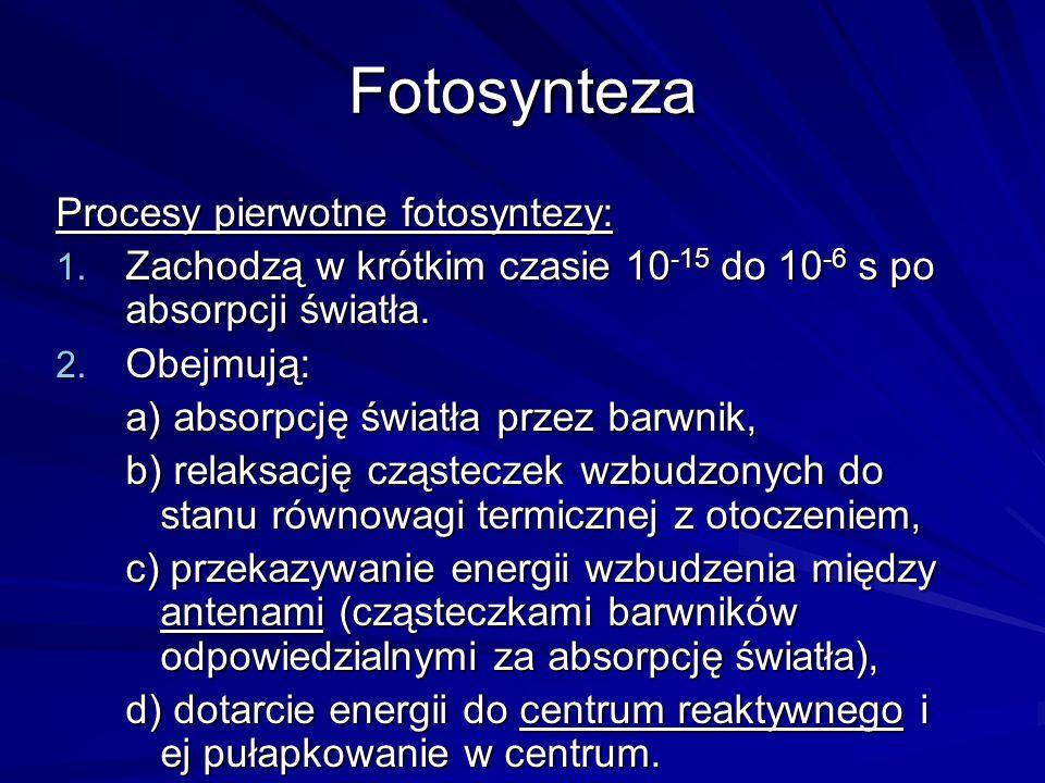 Fotosynteza Procesy pierwotne fotosyntezy: 1. Zachodzą w krótkim czasie 10 -15 do 10 -6 s po absorpcji światła. 2. Obejmują: a) absorpcję światła prze