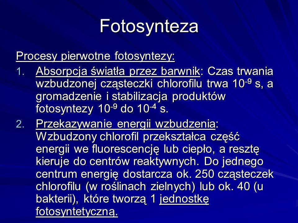 Fotosynteza Procesy pierwotne fotosyntezy: 1. Absorpcja światła przez barwnik: Czas trwania wzbudzonej cząsteczki chlorofilu trwa 10 -9 s, a gromadzen