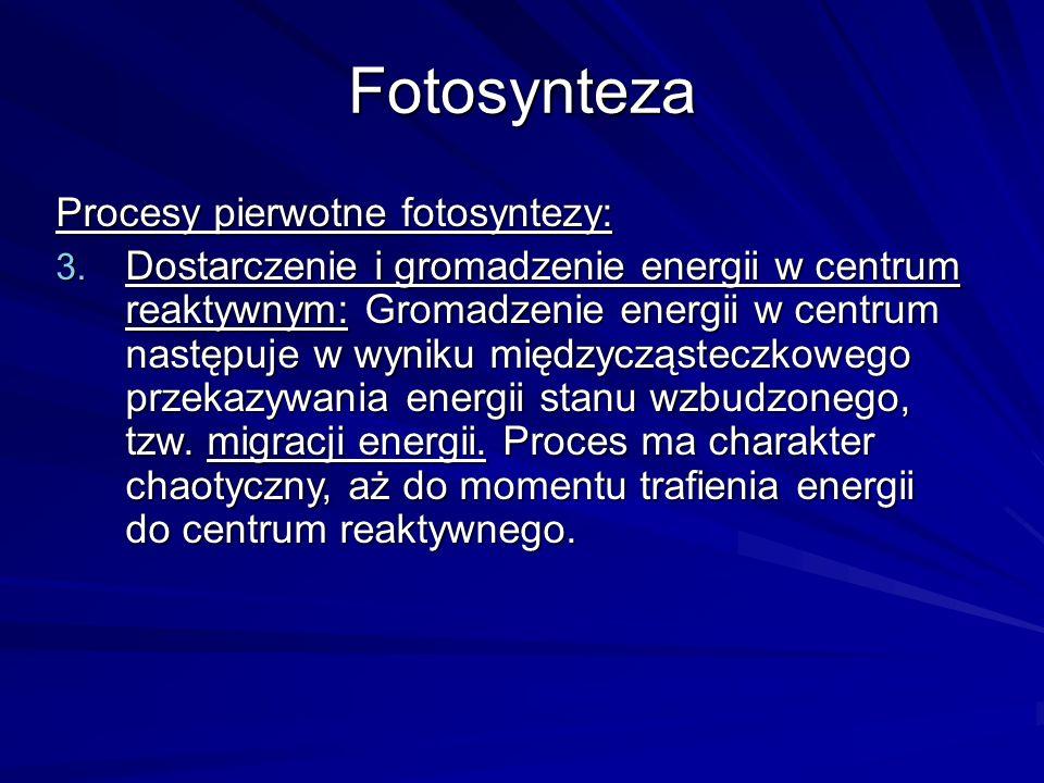 Fotosynteza Procesy pierwotne fotosyntezy: 3. Dostarczenie i gromadzenie energii w centrum reaktywnym: Gromadzenie energii w centrum następuje w wynik