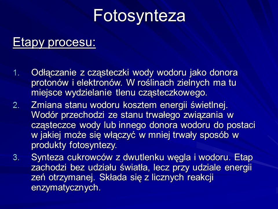 Fotosynteza Etapy procesu: 1. Odłączanie z cząsteczki wody wodoru jako donora protonów i elektronów. W roślinach zielnych ma tu miejsce wydzielanie tl