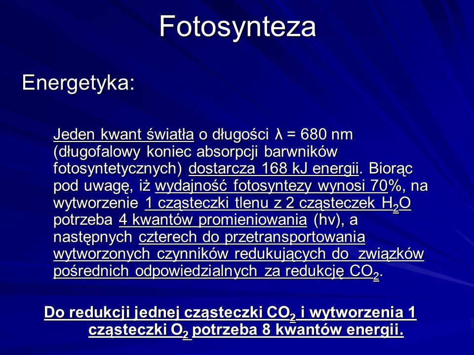 FotosyntezaEnergetyka: Jeden kwant światła o długości λ = 680 nm (długofalowy koniec absorpcji barwników fotosyntetycznych) dostarcza 168 kJ energii.