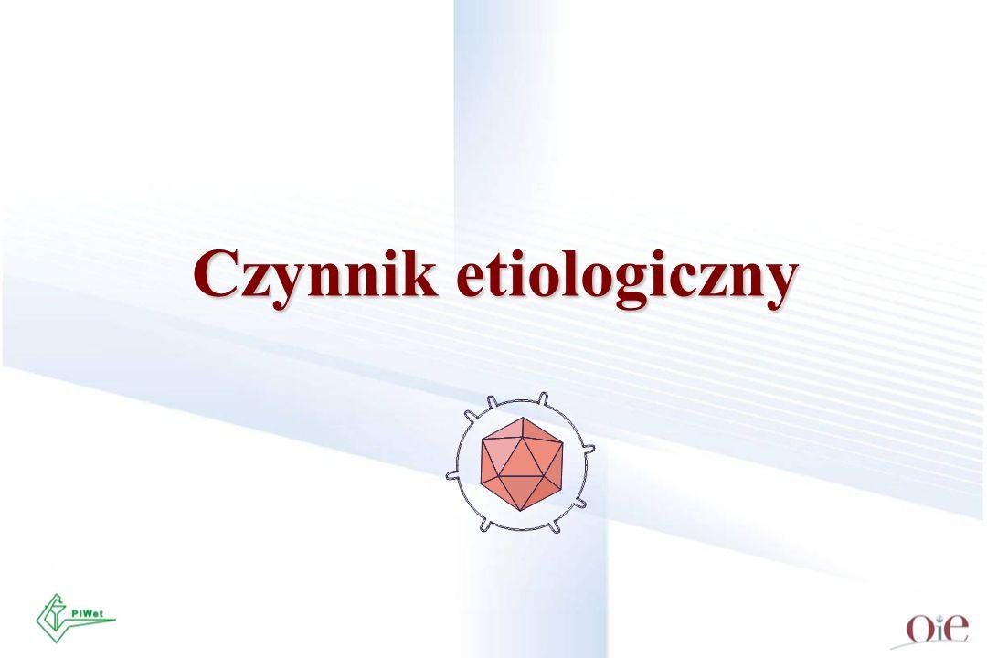 Czynnik etiologiczny