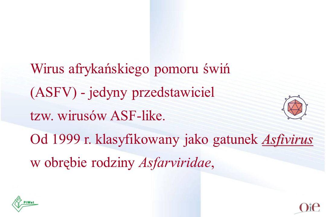 Wirus afrykańskiego pomoru świń (ASFV) - jedyny przedstawiciel tzw. wirusów ASF-like. Asfivirus Od 1999 r. klasyfikowany jako gatunek Asfivirus w obrę