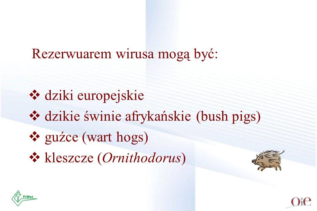 Rezerwuarem wirusa mogą być: dziki europejskie dzikie świnie afrykańskie (bush pigs) guźce (wart hogs) kleszcze (Ornithodorus)