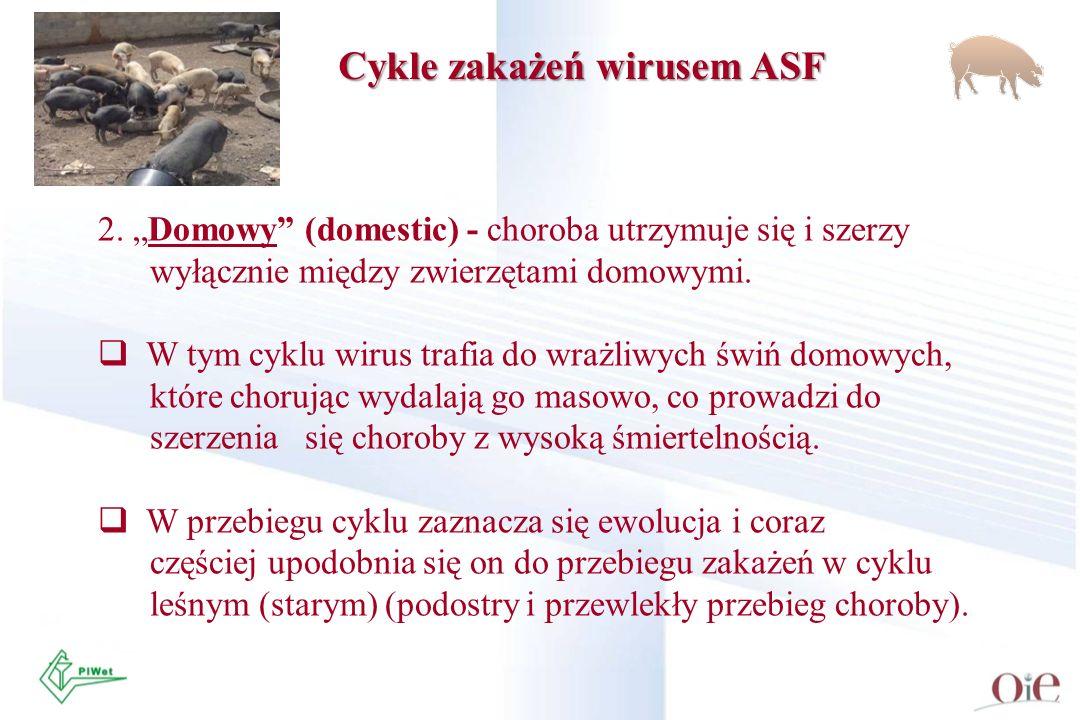 2. Domowy (domestic) - choroba utrzymuje się i szerzy wyłącznie między zwierzętami domowymi. W tym cyklu wirus trafia do wrażliwych świń domowych, któ