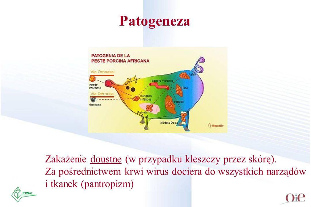 Patogeneza Zakażenie doustne (w przypadku kleszczy przez skórę). Za pośrednictwem krwi wirus dociera do wszystkich narządów i tkanek (pantropizm)