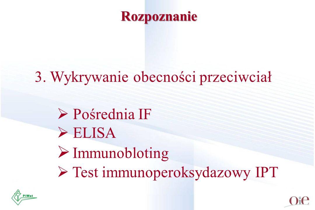 Rozpoznanie 3. Wykrywanie obecności przeciwciał Pośrednia IF ELISA Immunobloting Test immunoperoksydazowy IPT