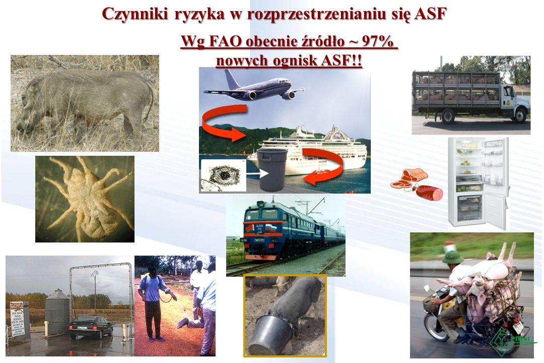 Czynniki ryzyka w rozprzestrzenianiu się ASF Wg FAO obecnie źródło ~ 97% nowych ognisk ASF!!