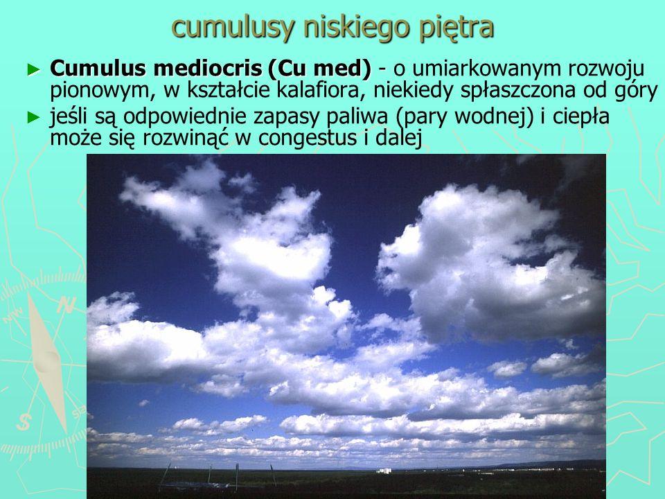 cumulusy niskiego piętra Cumulus mediocris (Cu med) - Cumulus mediocris (Cu med) - o umiarkowanym rozwoju pionowym, w kształcie kalafiora, niekiedy sp