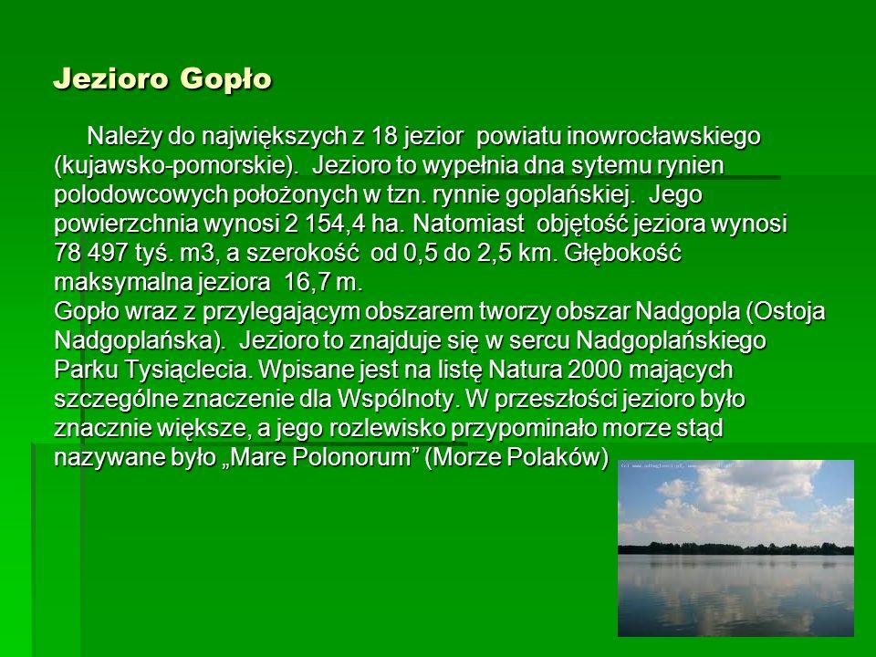Jezioro Gopło Należy do największych z 18 jezior powiatu inowrocławskiego (kujawsko-pomorskie). Jezioro to wypełnia dna sytemu rynien polodowcowych po