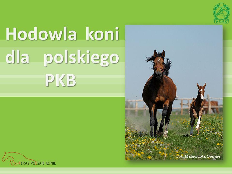 Hodowla koni dla polskiego PKB Fot. Małgorzata Siergiej