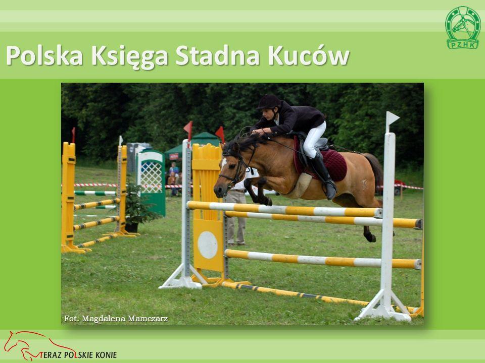 Polska Księga Stadna Kuców Fot. Magdalena Mamczarz
