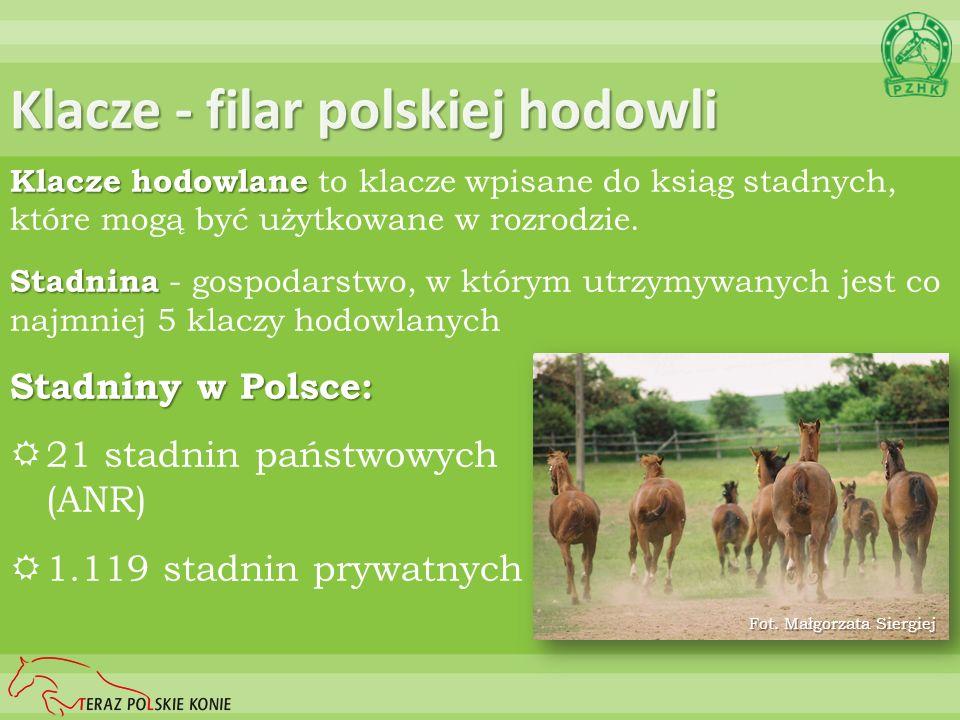 Klacze - filar polskiej hodowli Klacze hodowlane Klacze hodowlane to klacze wpisane do ksiąg stadnych, które mogą być użytkowane w rozrodzie. Stadnina