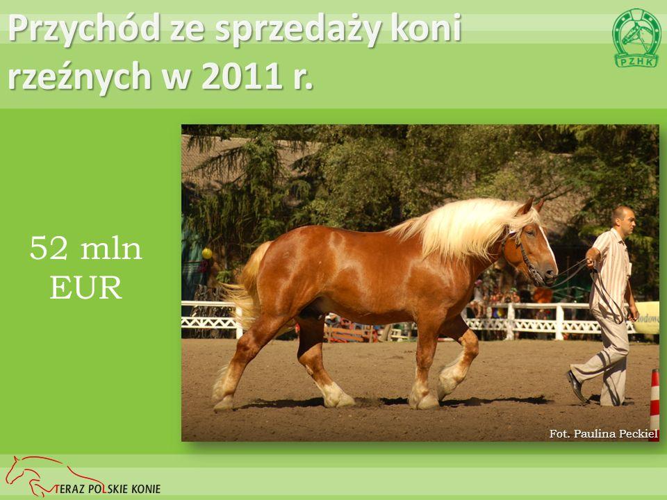 Przychód ze sprzedaży koni rzeźnych w 2011 r. 52 mln EUR Fot. Paulina Peckiel