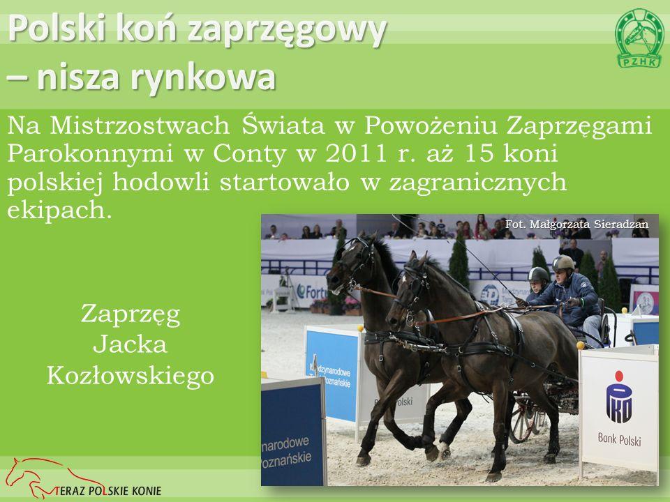 Polski koń zaprzęgowy – nisza rynkowa Na Mistrzostwach Świata w Powożeniu Zaprzęgami Parokonnymi w Conty w 2011 r. aż 15 koni polskiej hodowli startow