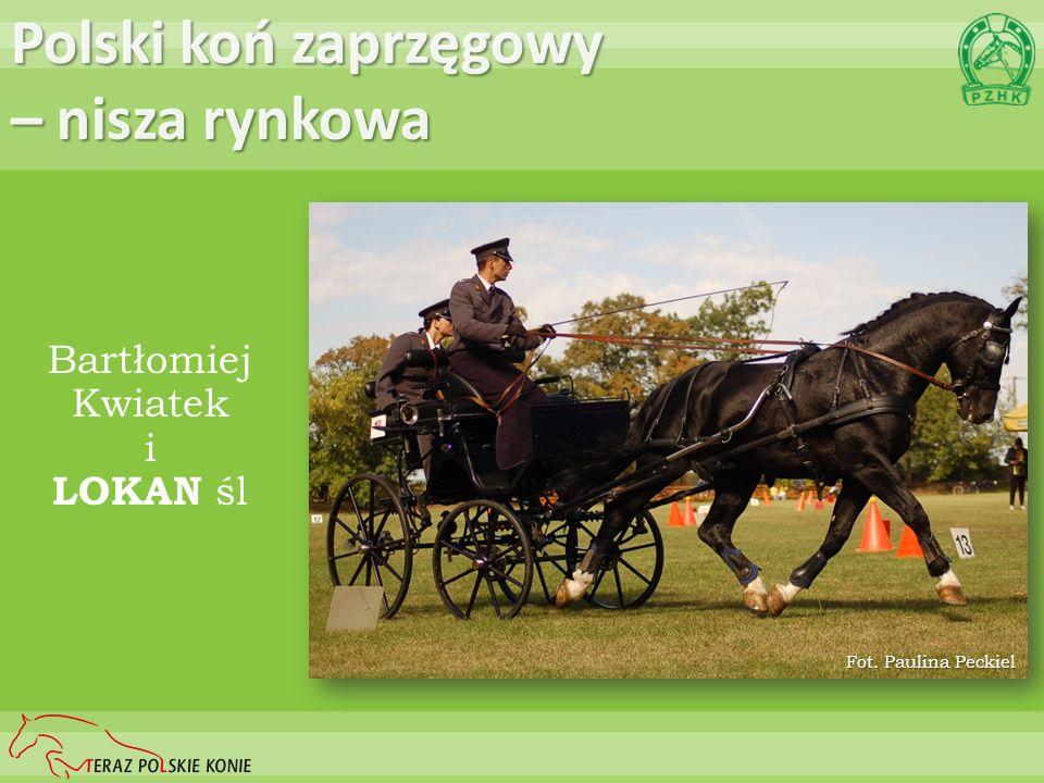 Polski koń zaprzęgowy – nisza rynkowa Bartłomiej Kwiatek i LOKAN śl Fot. Paulina Peckiel