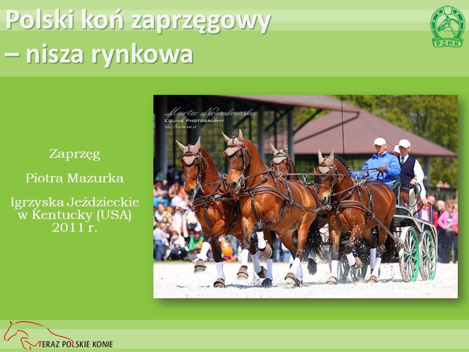 Polski koń zaprzęgowy – nisza rynkowa Zaprzęg Piotra Mazurka Igrzyska Jeździeckie w Kentucky (USA) 2011 r.