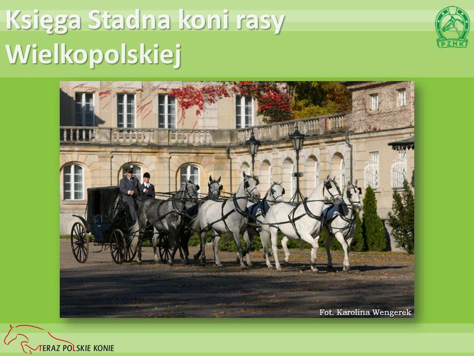 Księga Stadna koni rasy Polski Koń Szlachetny Półkrwi Fot. Ewa Wojtczuk