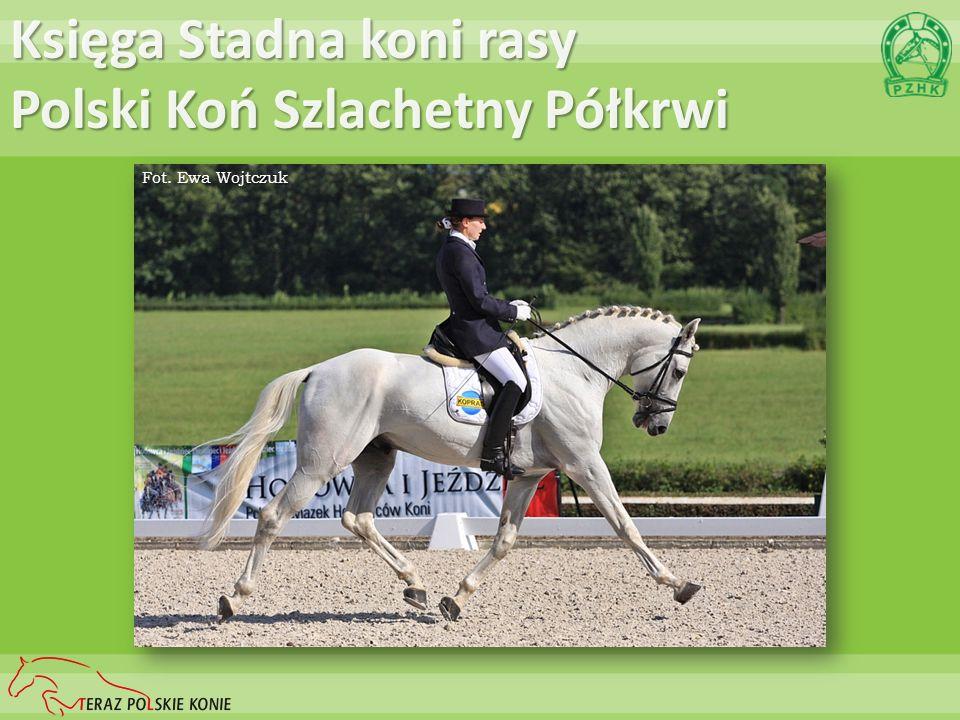 Księga Stadna koni rasy Śląskiej Fot. Katarzyna Popielska