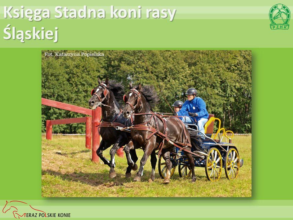 Rynek koni a polski PKB