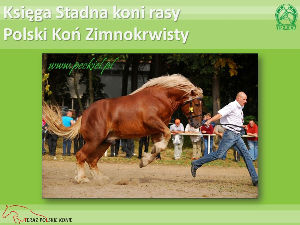 Księga Stadna koni rasy Polski Koń Zimnokrwisty