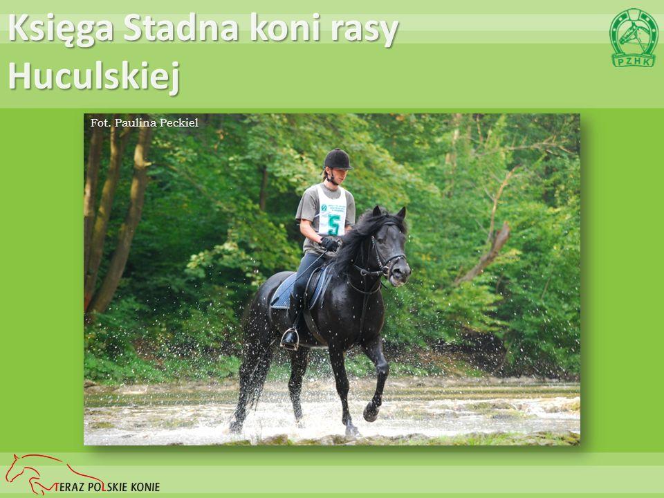 Księga Stadna koni rasy Huculskiej Fot. Paulina Peckiel