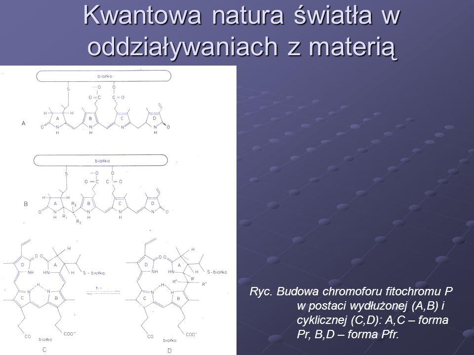 Kwantowa natura światła w oddziaływaniach z materią Ryc. Budowa chromoforu fitochromu P w postaci wydłużonej (A,B) i cyklicznej (C,D): A,C – forma Pr,