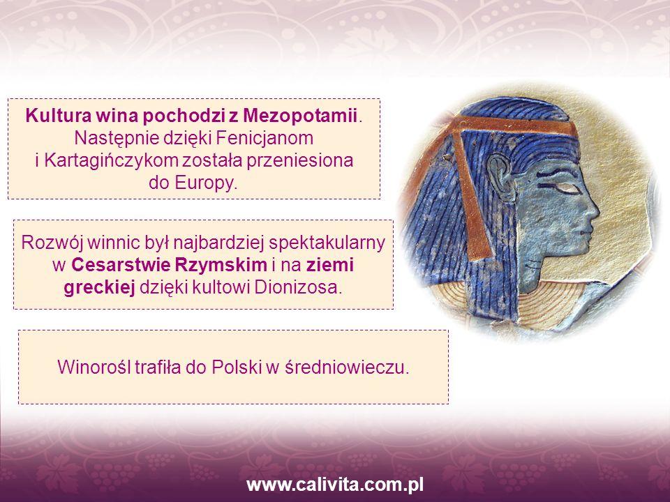 www.calivita.com.pl Kultura wina pochodzi z Mezopotamii. Następnie dzięki Fenicjanom i Kartagińczykom została przeniesiona do Europy. Winorośl trafiła