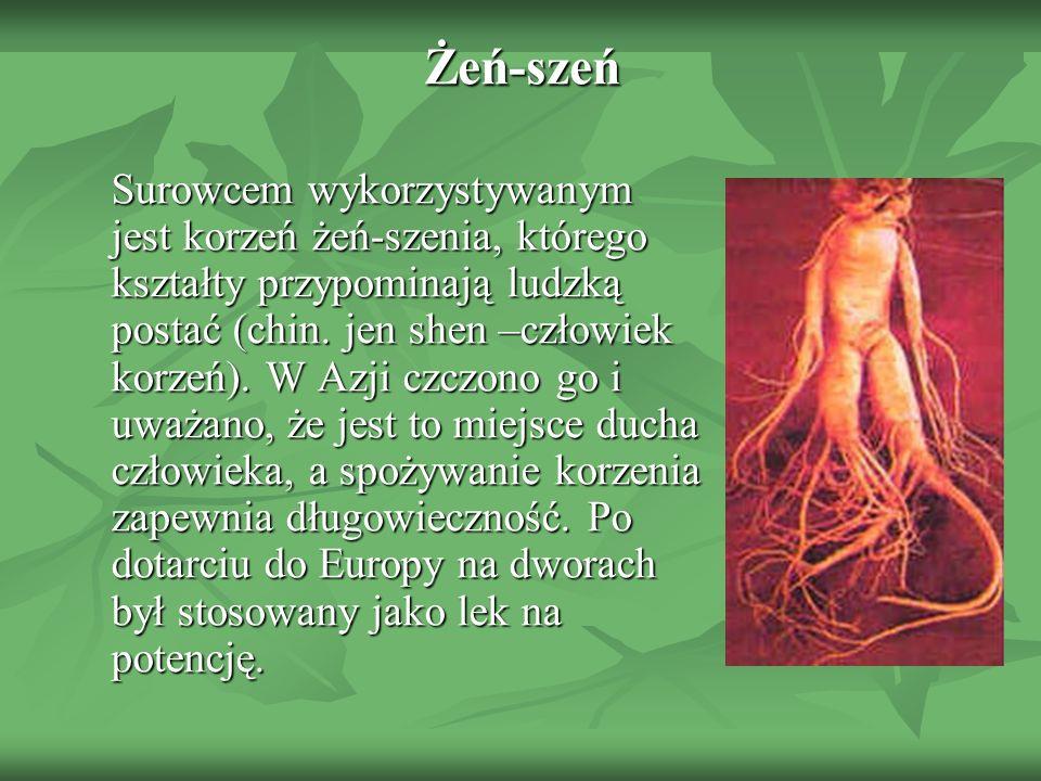 Żeń-szeń Surowcem wykorzystywanym jest korzeń żeń-szenia, którego kształty przypominają ludzką postać (chin. jen shen –człowiek korzeń). W Azji czczon