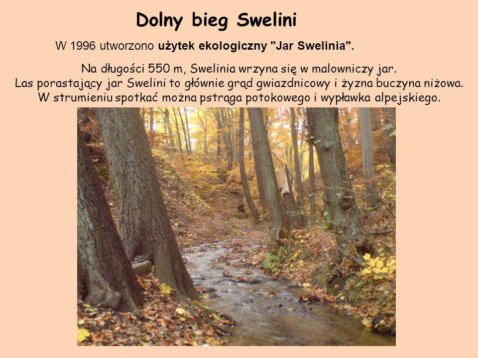 W 1996 utworzono użytek ekologiczny