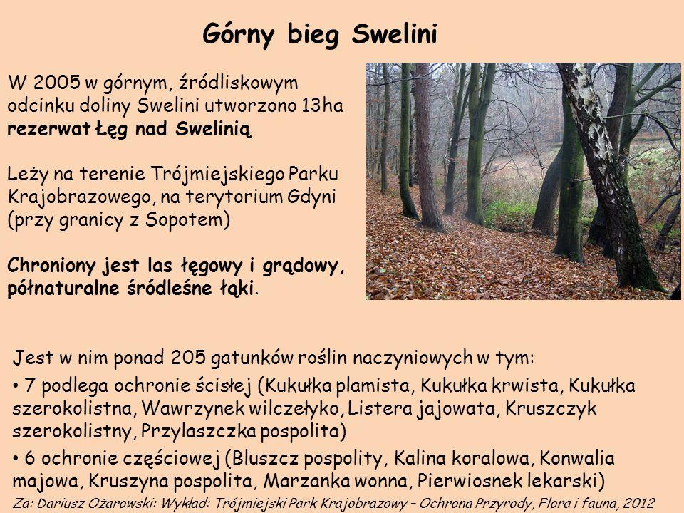 Górny bieg Swelini W 2005 w górnym, źródliskowym odcinku doliny Swelini utworzono 13ha rezerwat Łęg nad Swelinią Leży na terenie Trójmiejskiego Parku