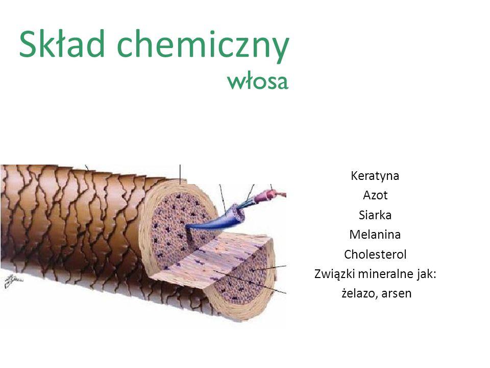 Skład chemiczny Keratyna Azot Siarka Melanina Cholesterol Związki mineralne jak: żelazo, arsen włosa