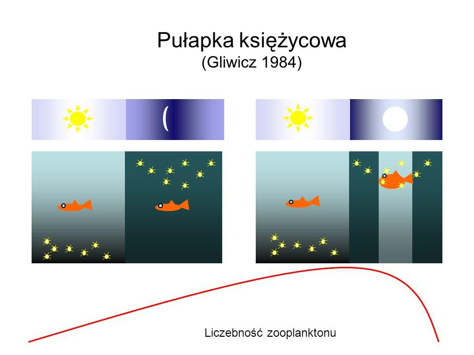 Pułapka księżycowa (Gliwicz 1984) Liczebność zooplanktonu