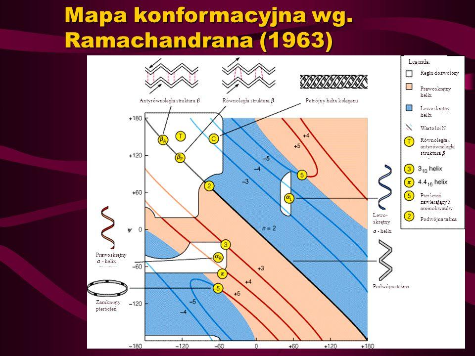 Mapa konformacyjna wg. Ramachandrana (1963) Zamknięty pierścień Prawoskrętny - helix Antyrównoległa struktura Równoległa struktura Potrójny helix kola