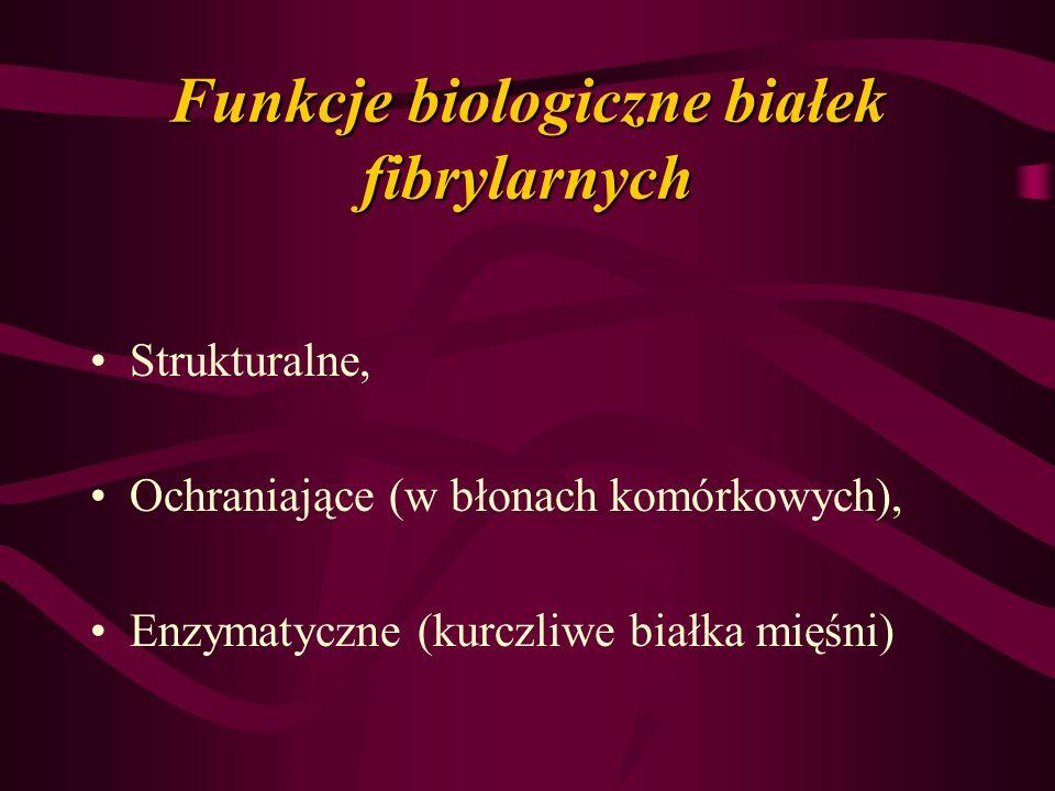 Funkcje biologiczne białek fibrylarnych Strukturalne, Ochraniające (w błonach komórkowych), Enzymatyczne (kurczliwe białka mięśni)