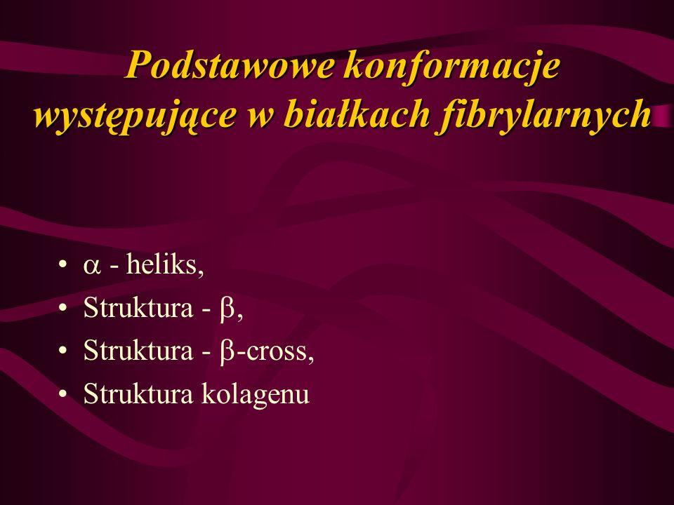 Podstawowe konformacje występujące w białkach fibrylarnych - heliks, Struktura -, Struktura - -cross, Struktura kolagenu