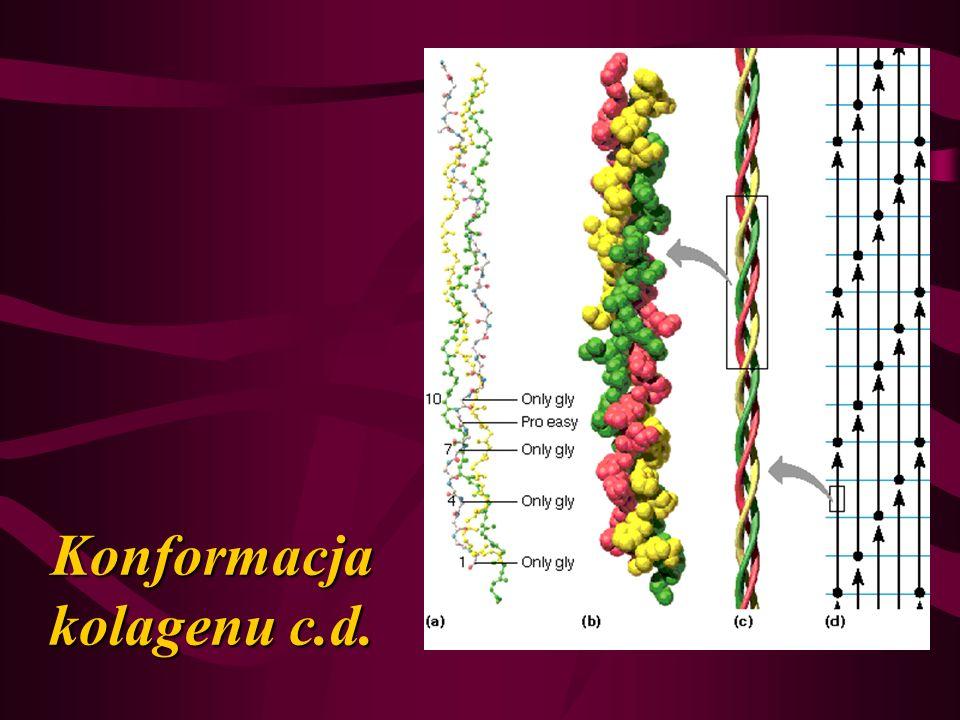 Konformacja kolagenu c.d.